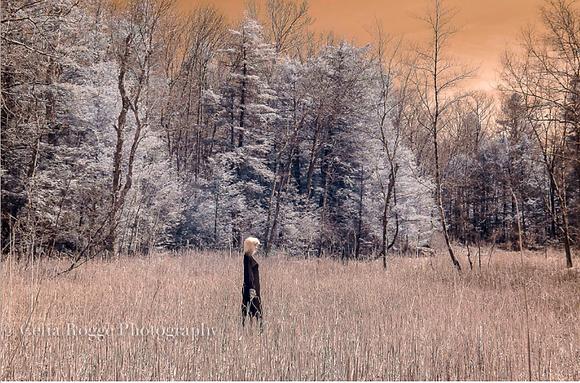 """(#1476) """"Field of Dreams..."""" Celia Rogge"""