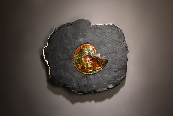 (#1867) Ammonite on Bronze, Studio Greytak