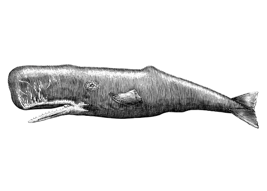 Whale-art-_001 copie.png