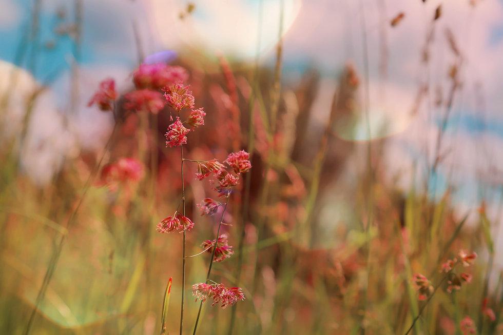20180602-flowersandlight.jpg