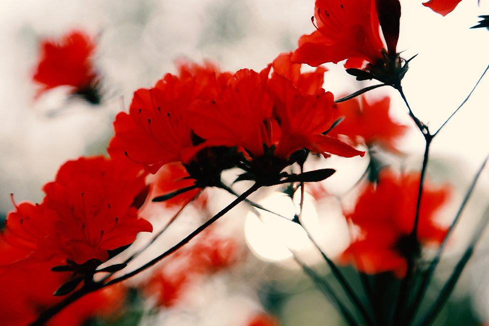 redd1.jpg