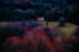 treescolourlr (1 of 1).jpg