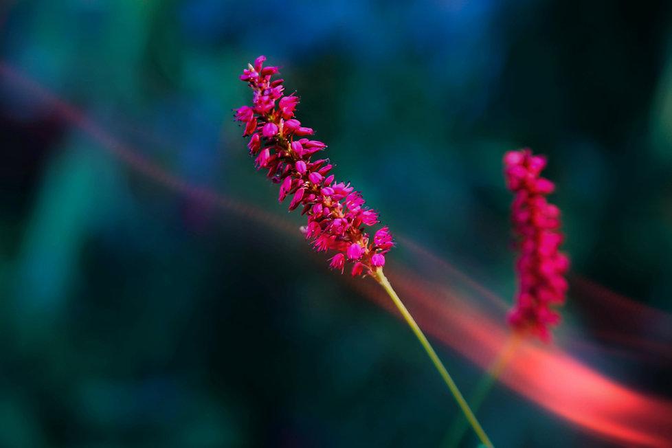colorflower3 (1 of 1).jpg