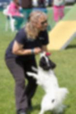 Dawn weaver agility, Papillon, Collie, dog, dog agility