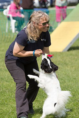 Dawn weaver agility, Papillon, Collie, dog, dog agility
