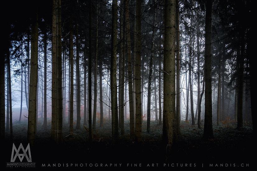 11 | Forest |  Meilen ZH