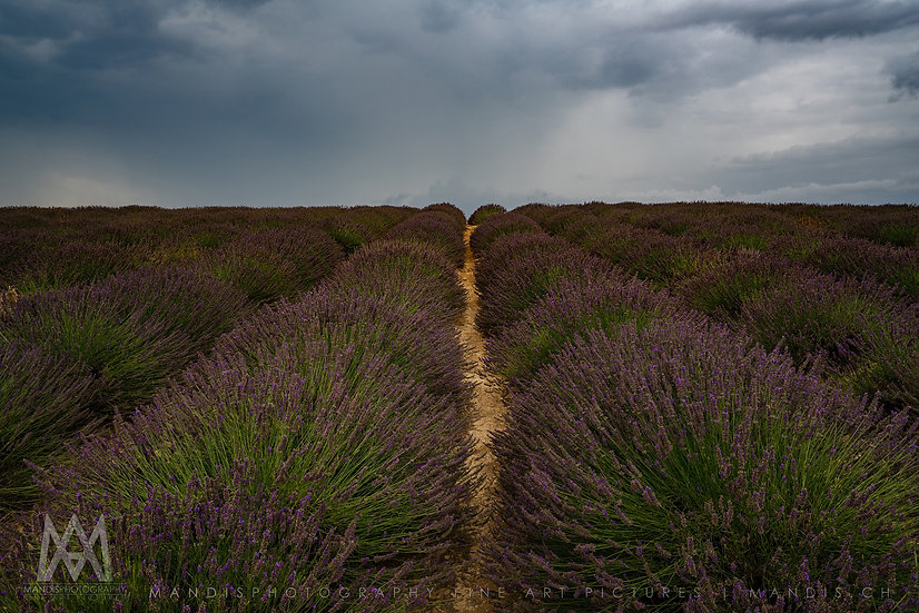 104 | Cloudy Fields | Frankreich