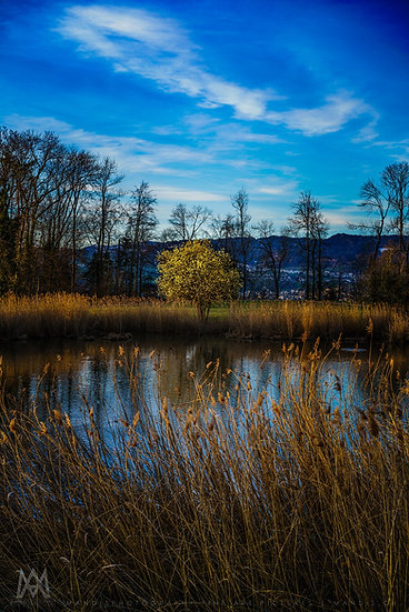 58 | Lonely Tree |  Hombrechtikon