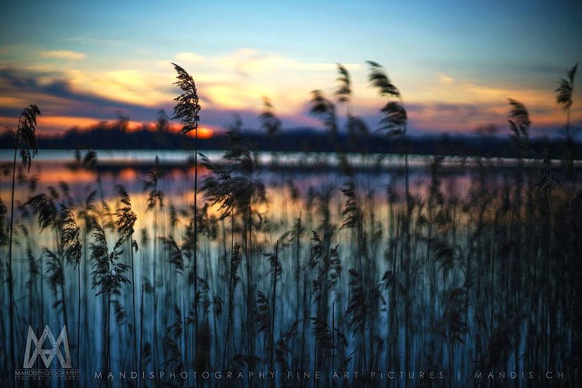 64 | Dreamy Lake |  Pfäffikon ZH