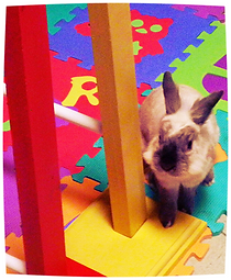 arricchimento ambientale conigli