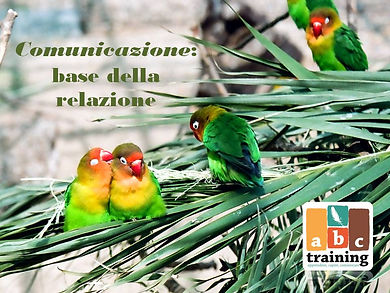 comunicazione pappagalli
