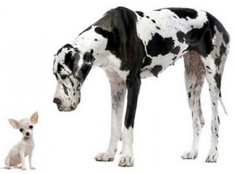 big-dog-little-dog-richard-etienne-blog