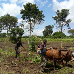 Ploughing the fields (the StepUp Programme - Northern Uganda)