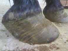 Roi cheval parage