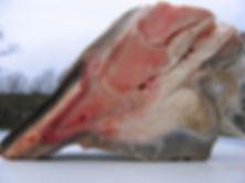 Coupe d'un pied de cheval,phalanges,naviculaires,tendons...