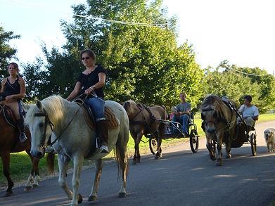 Balade dominicale, avec des chevaux parés naturels