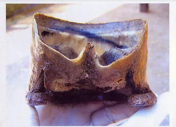 Intérieur d'une boite cornée