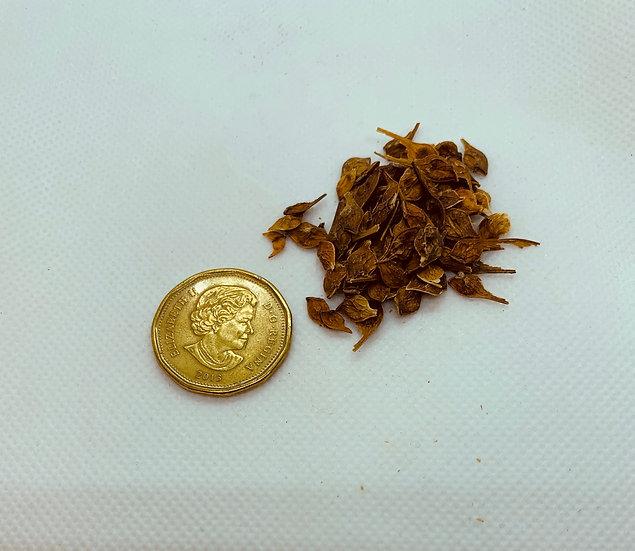 Acer spicatum - Mountain Maple