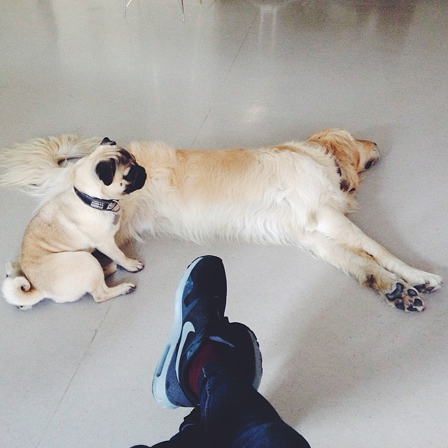 Buddy dogs