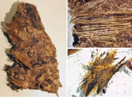 Guerreiros da Idade do Ferro foram enterrados em camas de penas, descobriu estudo