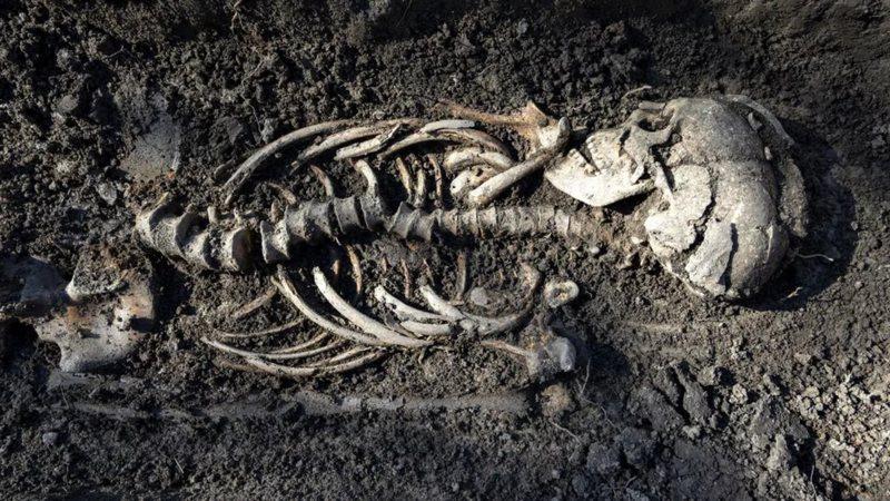 7 tumbas vikings foram encontradas na Suécia