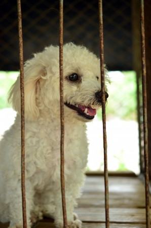 The seven-day holding period in New Jersey: not enough time to reunite missing pets with their famil