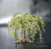 Miniature weeping tree