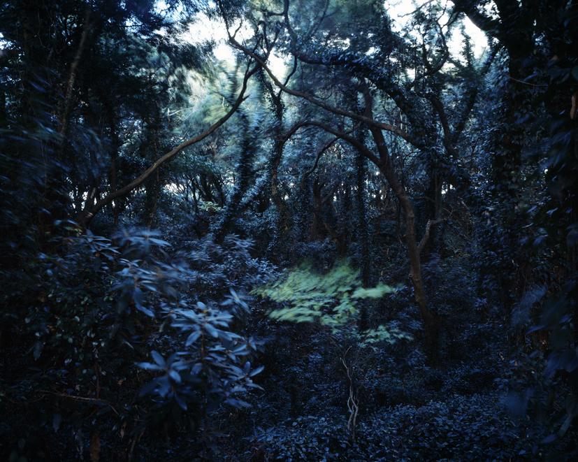 Forbidden forest-15,C print,150x190cm,2011