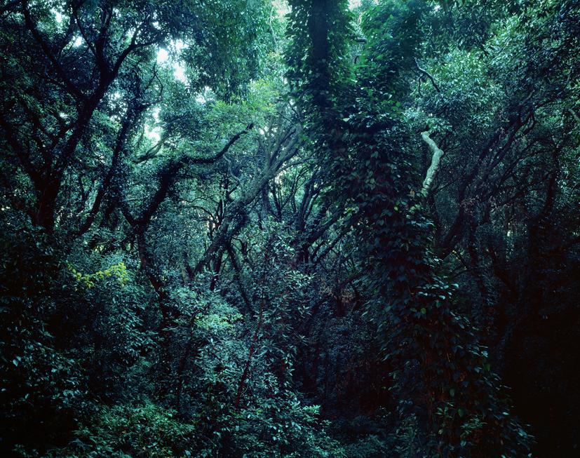 Forbidden forest-6,C print,150x190cm,2010
