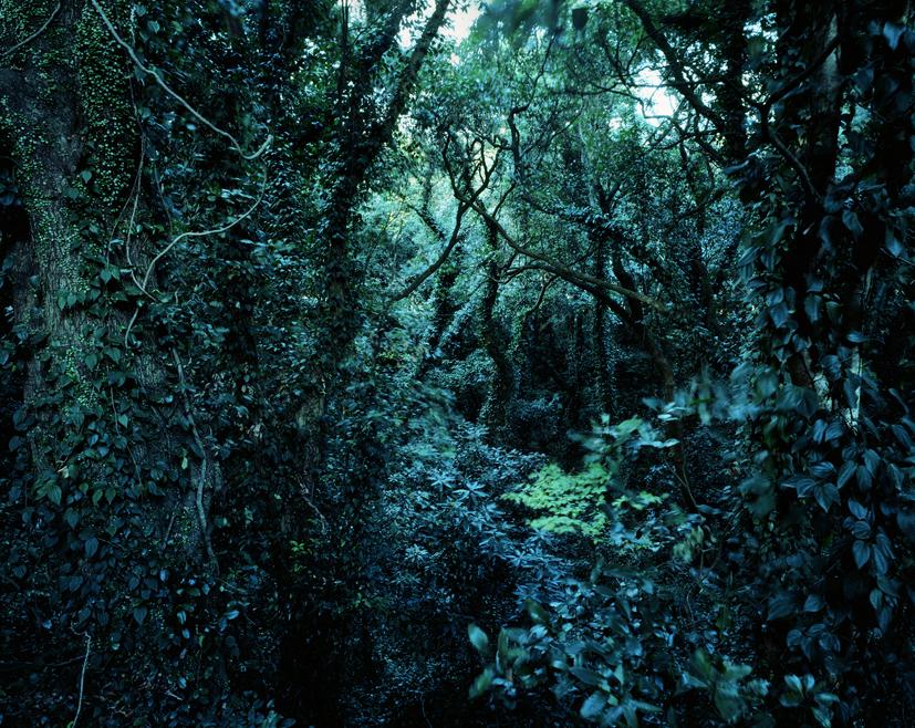 Forbidden forest-3,C print,150x190cm,2010