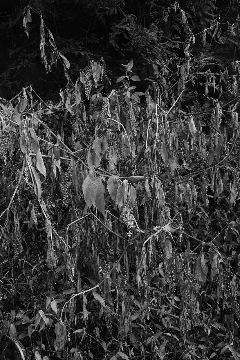 Fishhooks-13, Shrivel, 120x180cm, C print, 2015