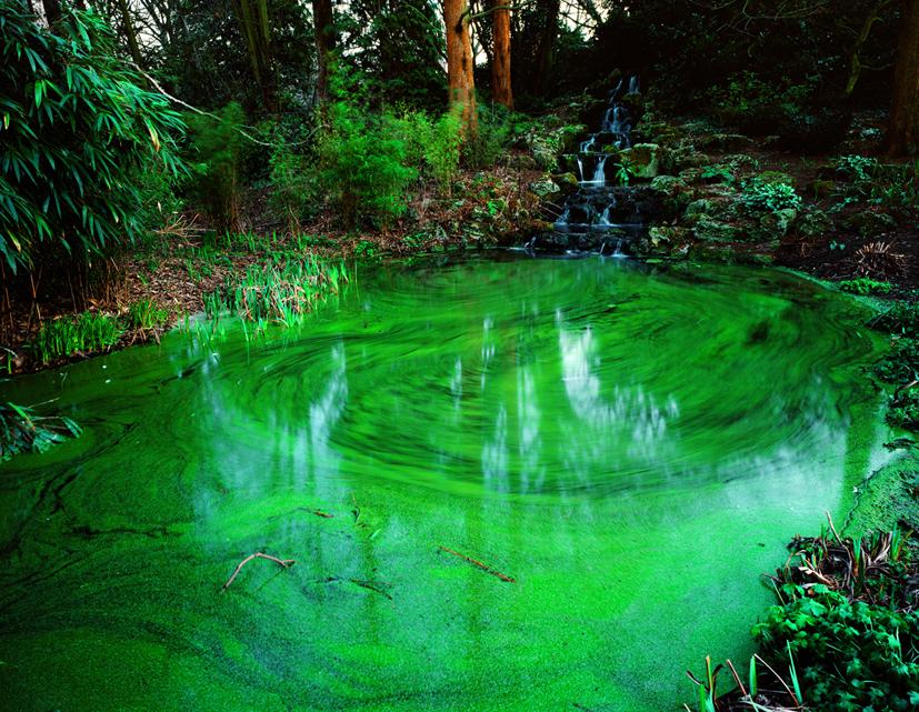 Untitled-2,Green pond, C print,100x125cm,2004