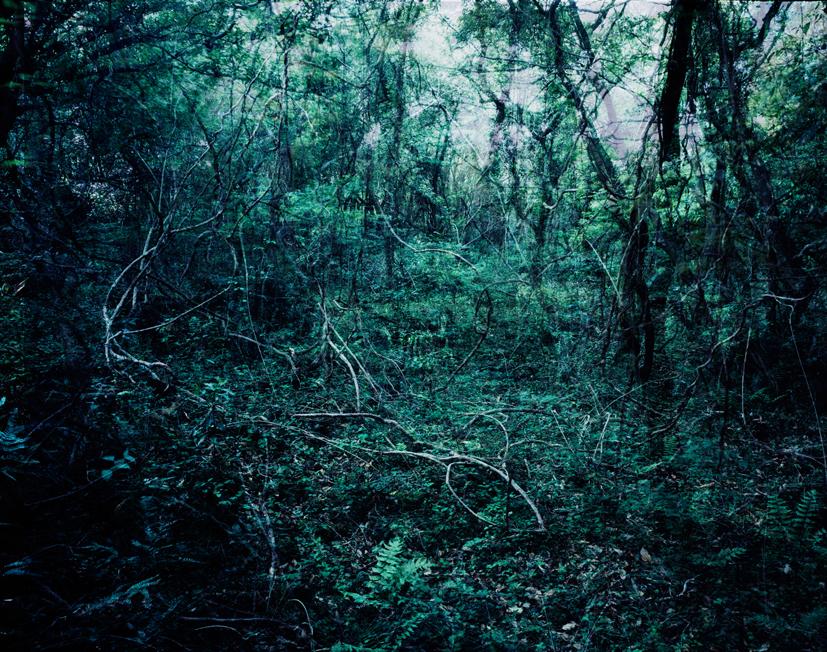Forbidden forest-19, C print, 150x190cm, 2011