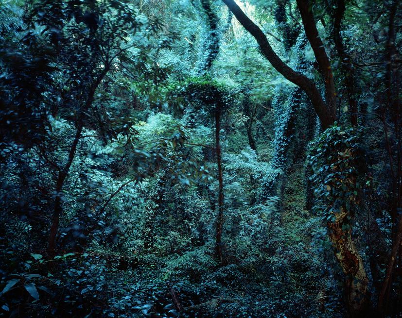 Forbidden forest-18,C print,150x190cm,2011