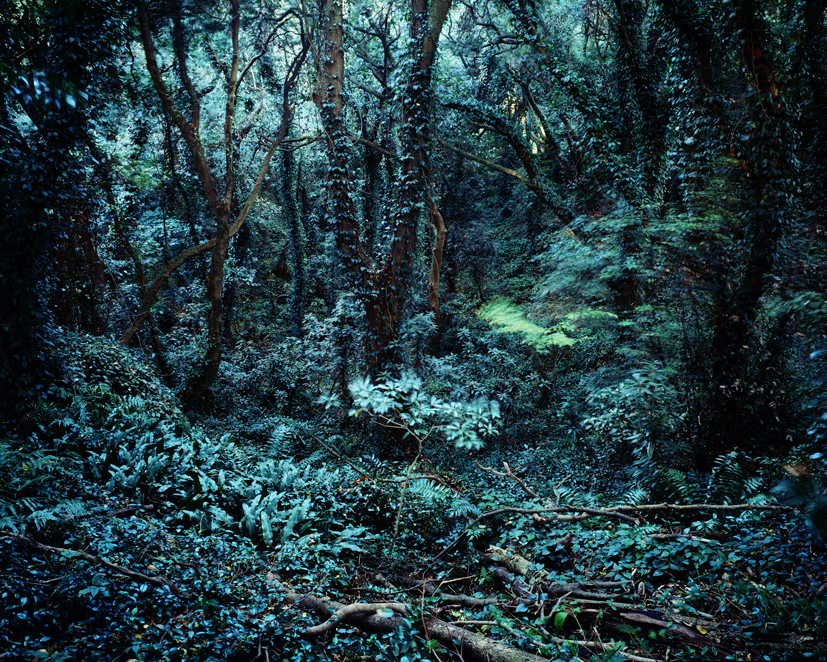 Forbidden forest-4,C print, 150x190cm,2011