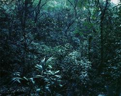 Forbidden forest-16, C print,150x190cm,2011