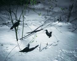 Tenseless-59, Black birds, C print,103x130cm, 2008