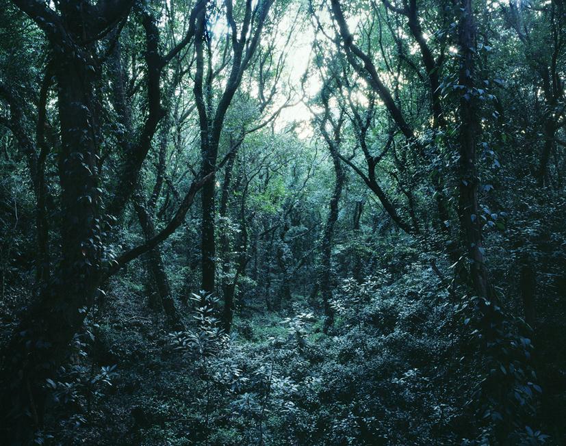 Forbidden forest-8,C print,150x190cm,2011
