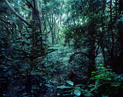Forbidden forest-12,C print,150x190cm,2011