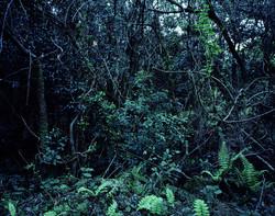 Forbidden forest-17,C print,150x190cm,2011