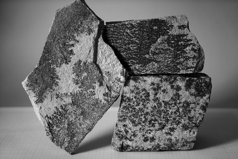 Fishhooks-24, Dendrites, 100x150cm, C print, 2014