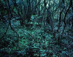 Forbidden forest-13,C print,150x190cm,2011