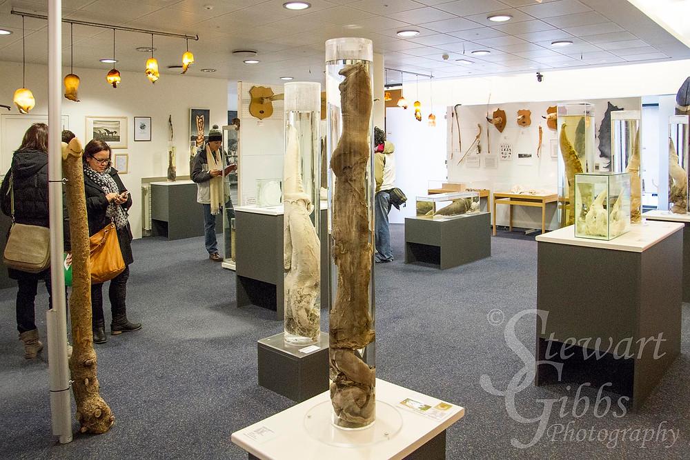 Penis Museum.jpg