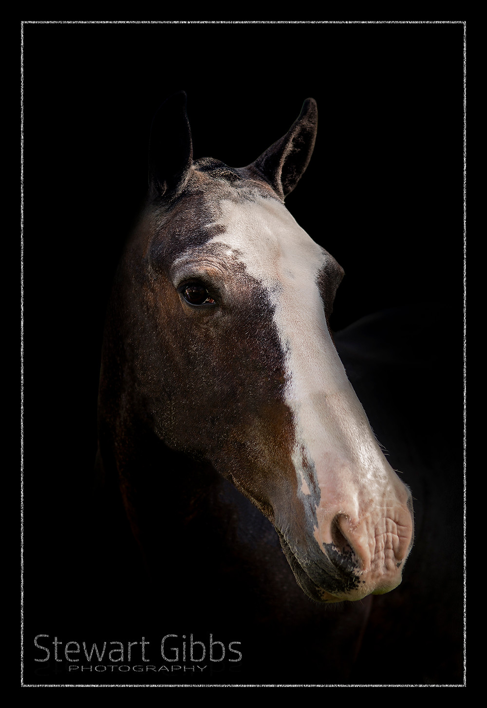 Equine / Horse Photography