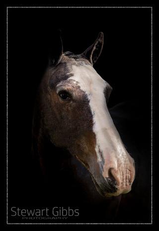 Equine Photo Shoots