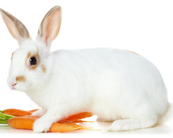 White-Rabbit-Cool-Wallpapers 01