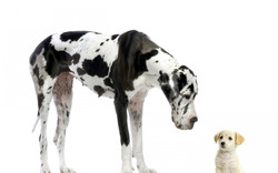 animals_dogs_puppies_white_bac_1680x1050_wallpaperfo.com