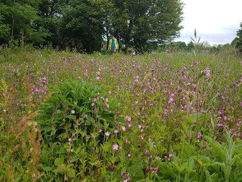 Tawny Owl Meadow - Expanding a wildflower meadow
