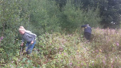 Restoring a lost Wildflower Meadow