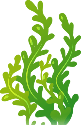 toppng.com-image-title-seaweed-clipart-2